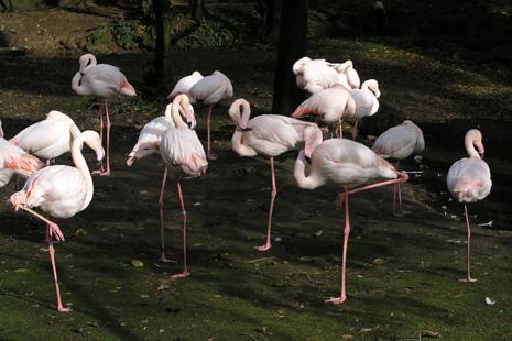 Zoo de lourosa - Family Secrets Residences